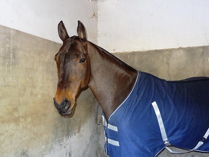 Hospitalización de caballos Hospital Veterinario