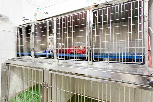 Hospitalizacion hospital veterinario san vicente