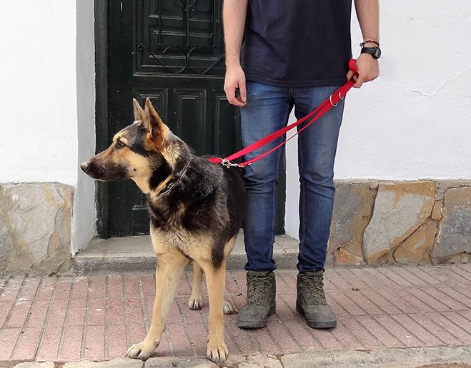 1 recogida en domicilio perro hospital veterinario san vicente