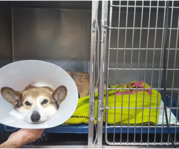 3.10-hospitalizacion-perros-2