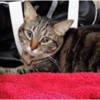 3.11-hospitalizacion-gatos-2