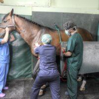 4.1-anestesia caballos-3