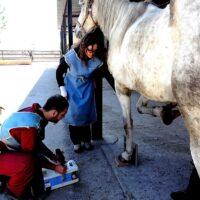 4.6-examen pre compra caballos (1)