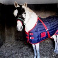 4.9-medicina interna caballo(4)