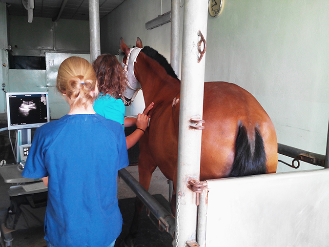 Diagnosis by image ultrasound horse