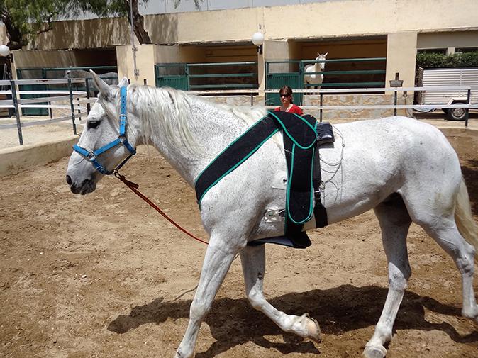 Holter Medicina interna caballo hospital veterinario san vicente copia