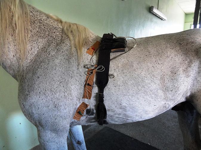 Medicina interna caballo Holter
