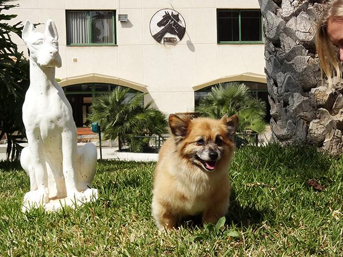 Peluqueria hospital veterinario san vicente 2