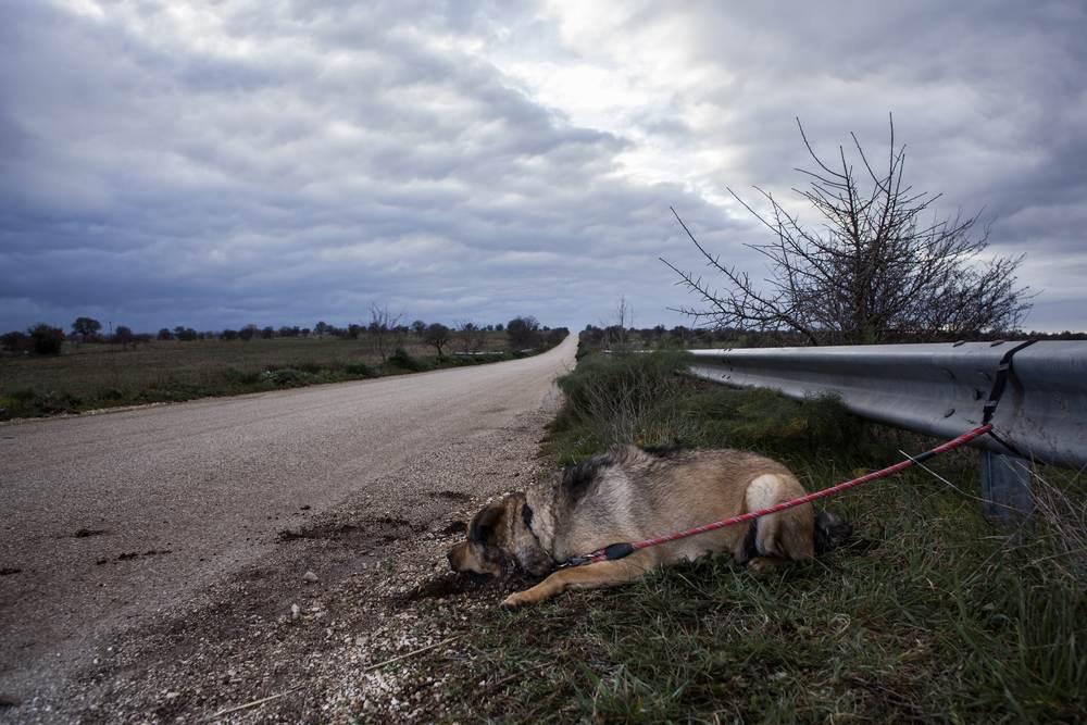 La crueldad de abandonar un animal