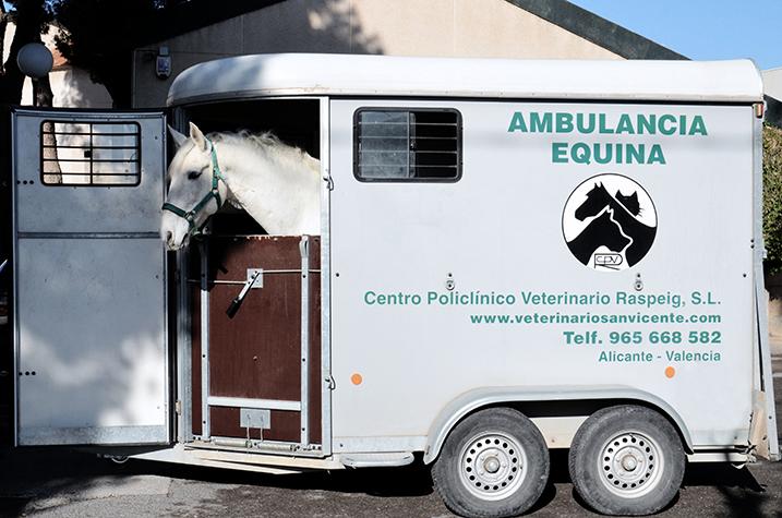 ambulancia caballos 3 hospital veterinario san vicente