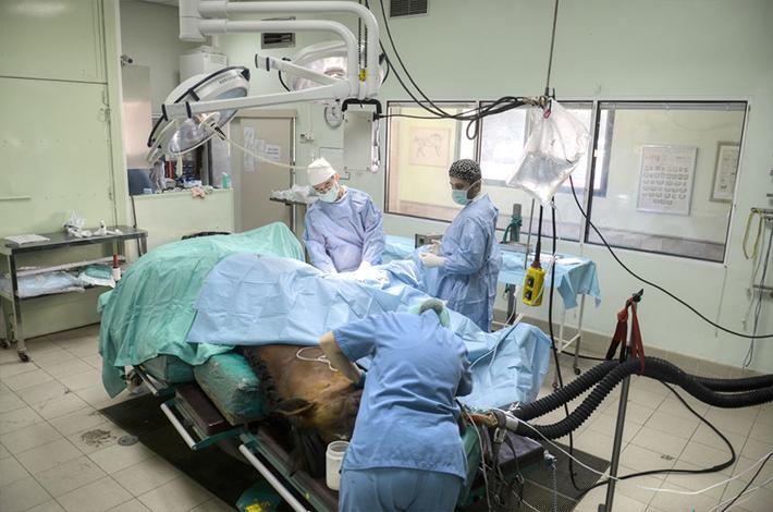 Cirugía traumatologÍa caballos