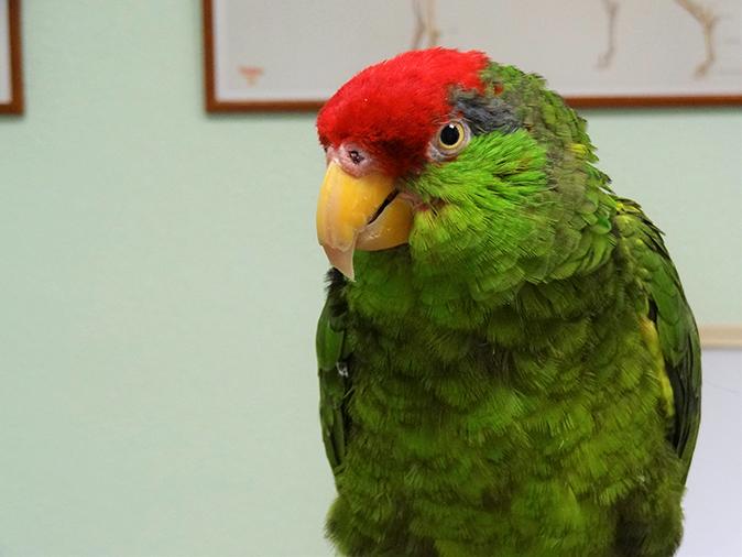 loro animales exoticos hospital veterinario san vicente