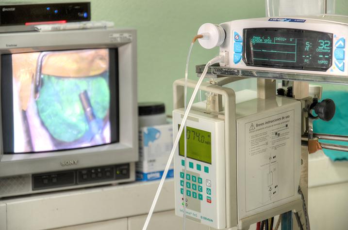 Cirugía cataratas perro 2