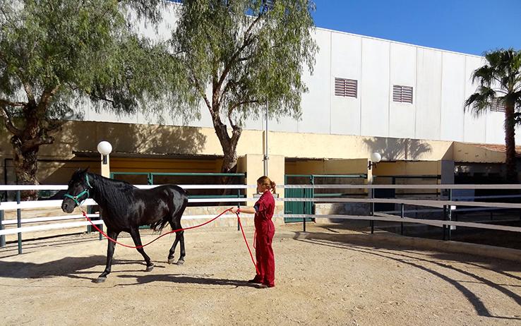 picadero caballos dando cuerda hospital veterinario san vicente