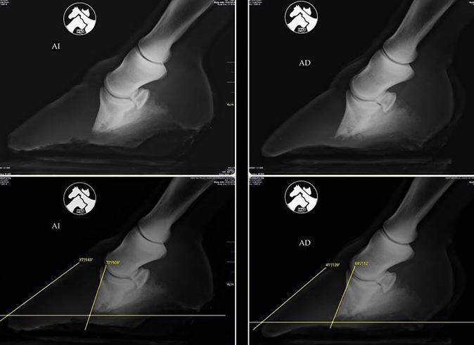 Radiografía caballo infosura