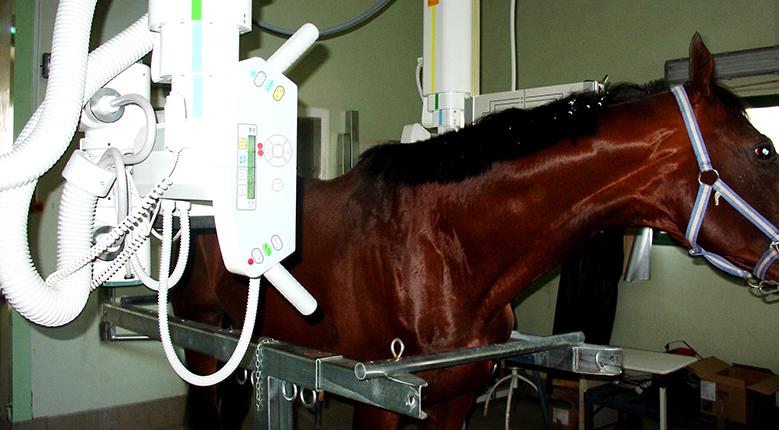 radiografia cuello caballo Hospital Veterinario San Vicente
