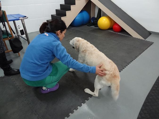 rehabilitacion perros hospital veterinario san vicente