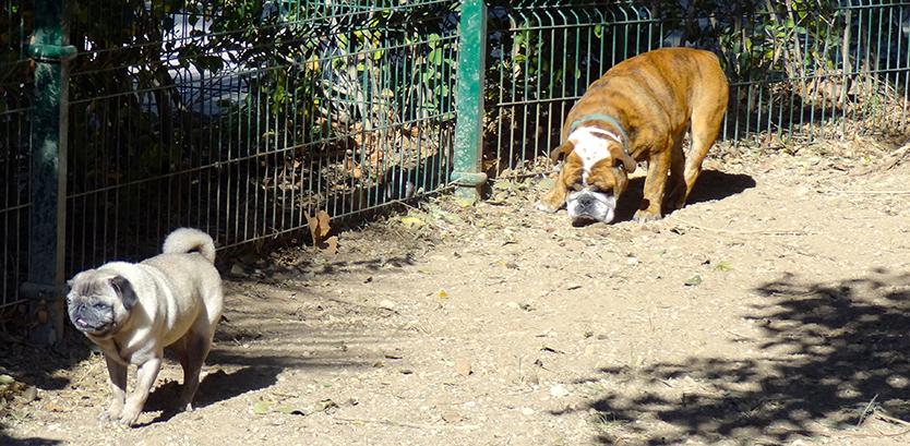 residencia canina 2 hospital veterinario san vicente