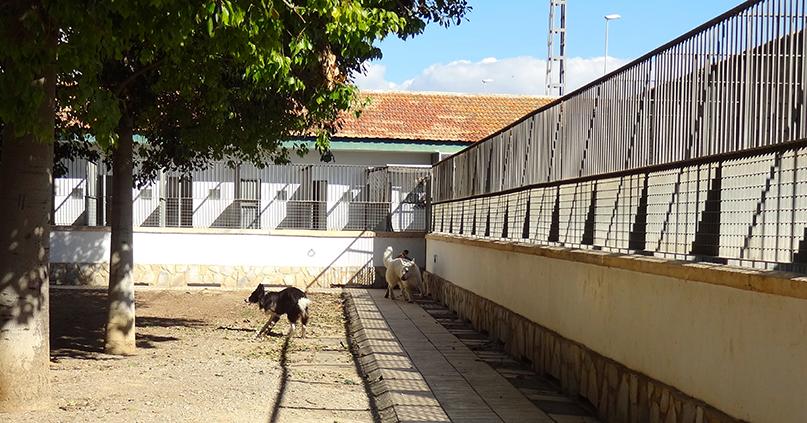 residencia canina 3 hospital veterinario san vicente