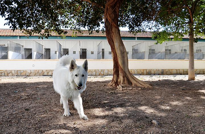 residencia canina 6 hospital veterinario san vicente
