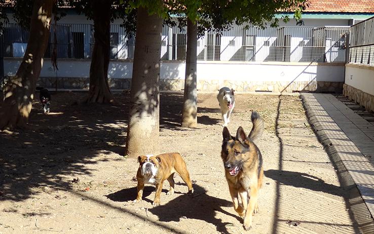 residencia canina hospital 4 veterinario san vicente