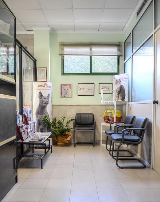 sala de espera 3 hospital veterinario san vicente