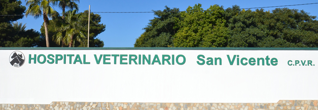 slider veterinario_2