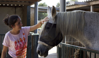 Artistas de todo el mundo donan obras para salvar a caballos españoles