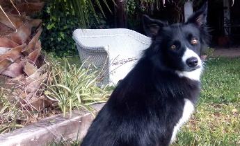 """¿Puede ser mi perro intolerante a algunos medicamentos """"típicos""""?"""