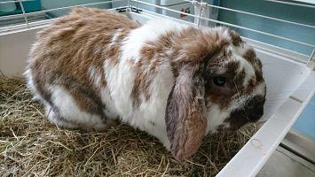 conejo Hospital veterinario san vicente alimentacion