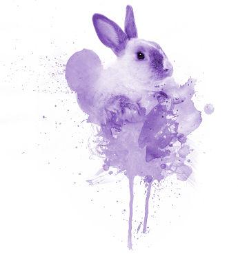 cuidados conejo hospital veterinario san vicente