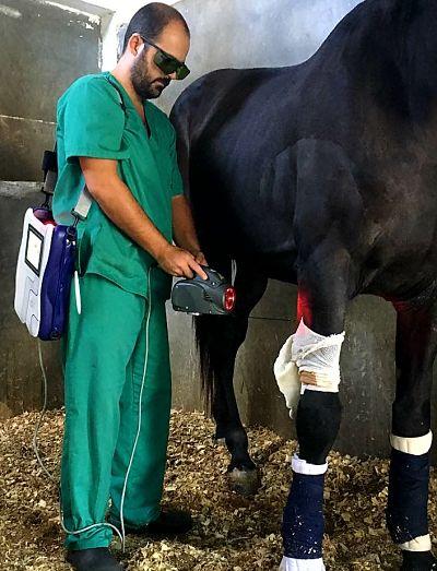 laser caballos terapia