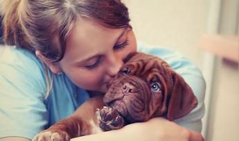 Seguros para perros y gatos: Fullcover – HOSPITAL VETERINARIO San Vicente
