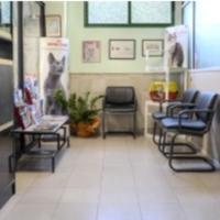 3.11-hospitalizacion-gatos-4