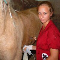 4.9-medicina-interna-caballo-2