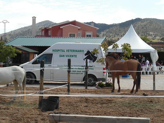 Asistencia veterinaria concurso hípico 2