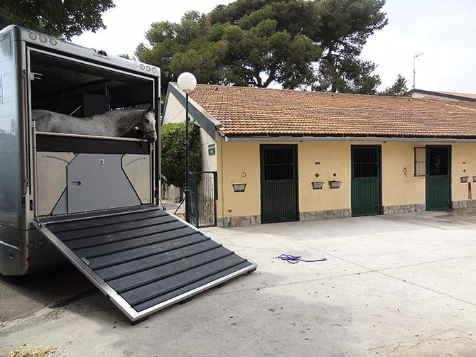 Camión caballos Hospital Veterinario