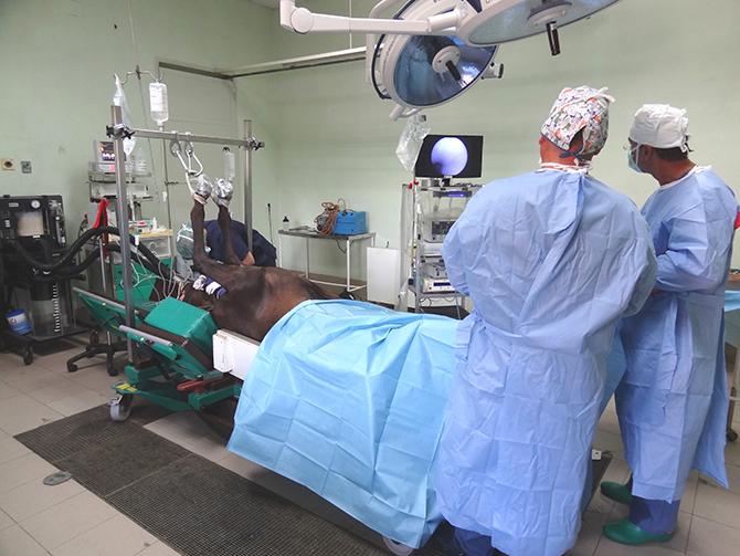 Cirugía artroscopia caballo