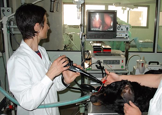 endoscopia biopsia hospital veterinario san vicente