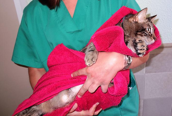 Hospitalización de gatos 3