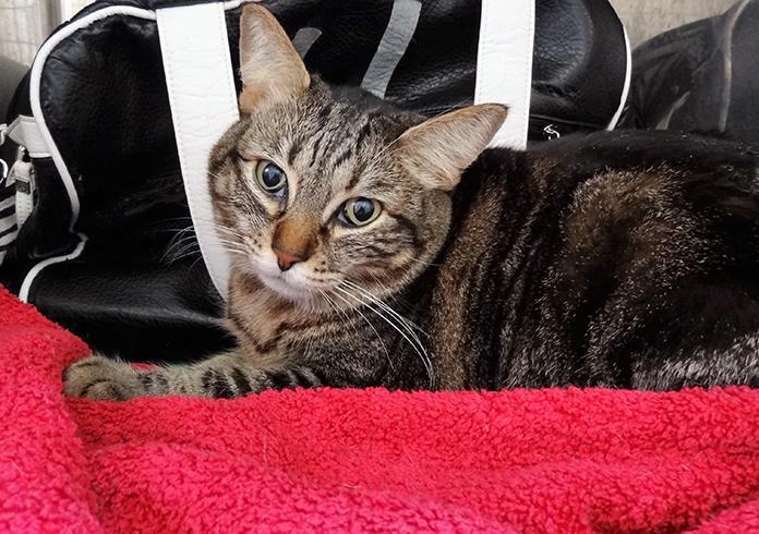 Hospitalización de gatos 4