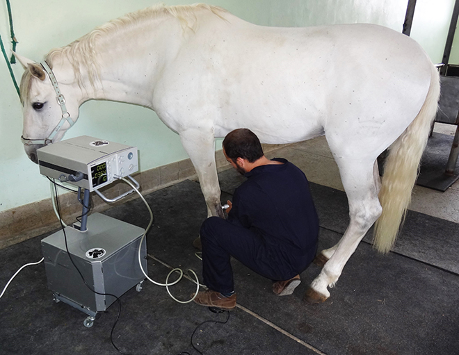 Waves of shock horse, Veterinary hospital