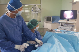 Castration or sterilization of dogs and cats by laparoscopy