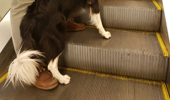 The dangers of dogs on the escalators