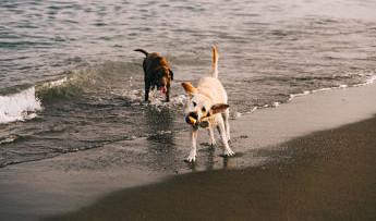 ¿Le pican las medusas a los perros? ¿Qué tendría que hacer si sospecho de una picadura?